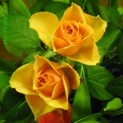 Tipps Für Die Haltbarkeit Von Schnittblumenfür Viel Freude An Den ... Schnittblumen Langer Frisch Bleiben