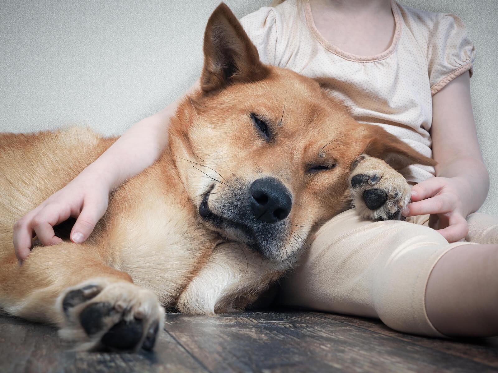 Hund, Katze, Wellensittich und Co.: Welches Haustier passt zu ...