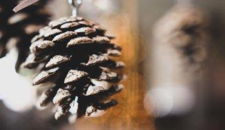 Sozialer! Bewusster! Umweltfreundlicher! Tierlieber! Kleine, gute Vorsätze für Advent und Weihnachten