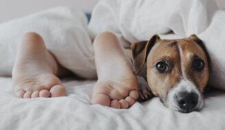 Familienfreundliche Hunderassen – Eine Übersicht